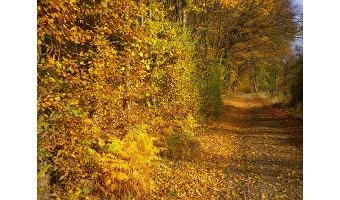 Goldener Herbst im Fendt-Caravan